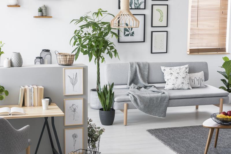 makkelijke planten voor in de woonkamer